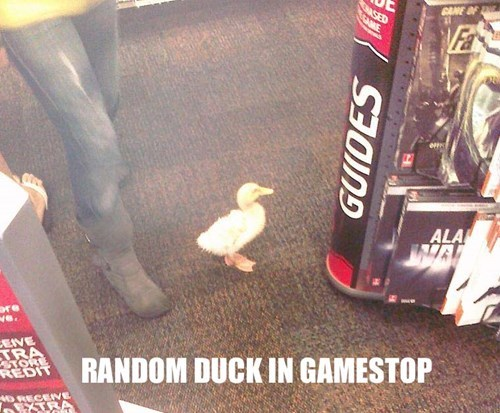 gamestop,ducks