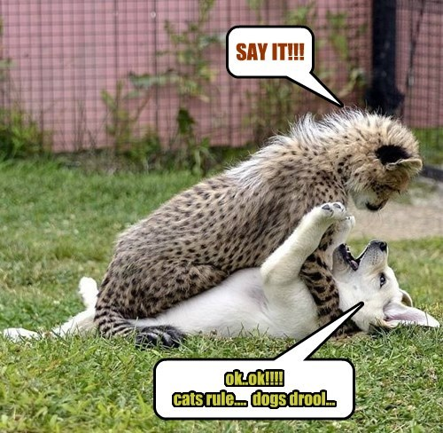 cats rule dogs drool - 8552727808