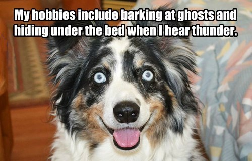 dogs captions cute - 8552815104