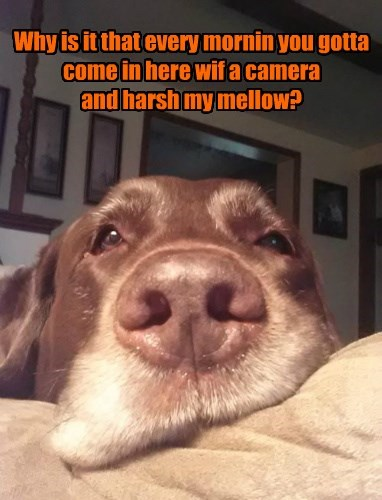 dogs caption funny - 8552864000
