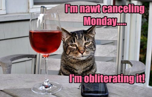 mondays,caption,Cats,funny