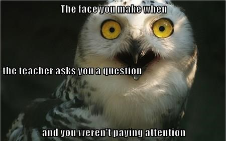 animals captions cute owls funny - 8552938752