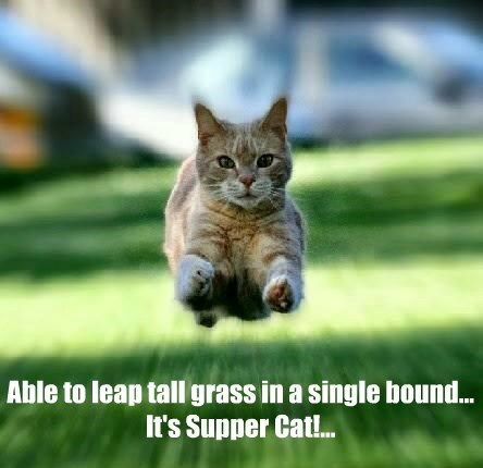 caption Cats funny - 8553339648