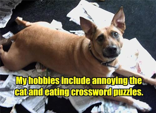 dogs caption crossword puzzle Cats funny - 8553358080