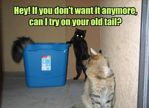 Hey! If you don't want it anymore, can I try on your old tail?