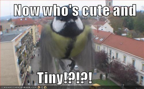 birds,captions,cute,funny