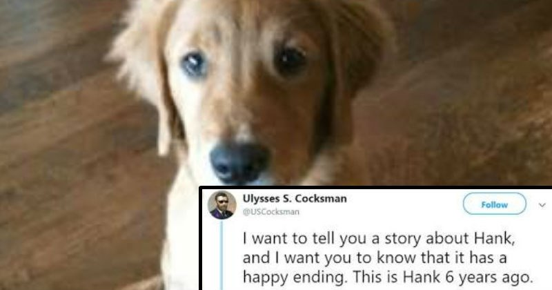 dogs twitter awesome inspiring social media animals win - 8553477