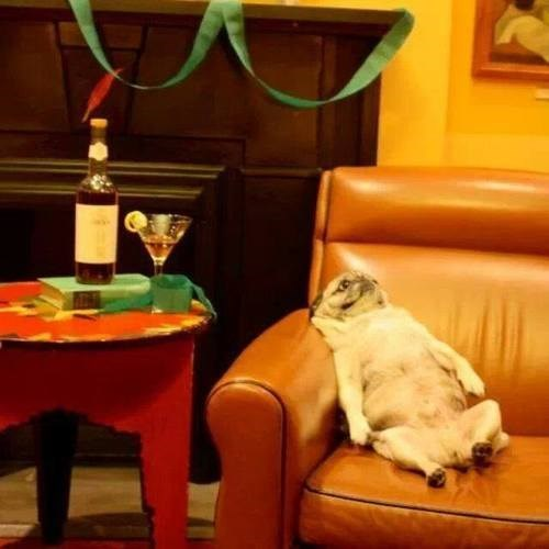 party-fails-livin-the-pug-life