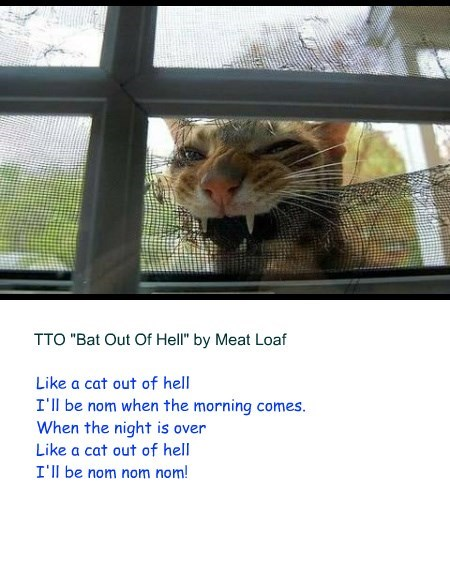 """Cat Out Of Hell"" (TTO ""Bat Out Of Hell"" by Meat Loaf)"