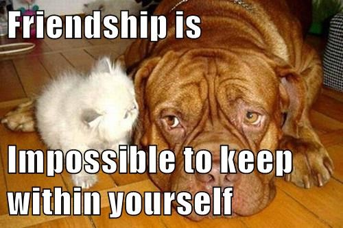 animals dogs deep thoughts friends caption Cats - 8554046464