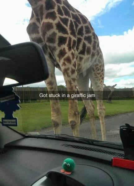funny memes giraffic jam