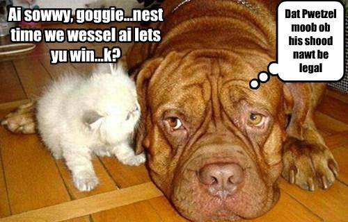 dogs kitten caption funny - 8554254848