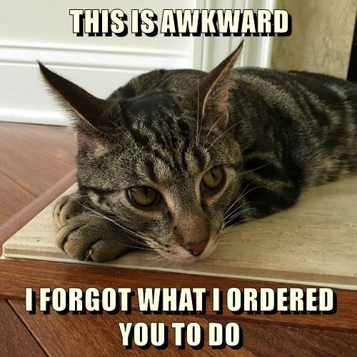 animals captions Cats funny - 8554275072