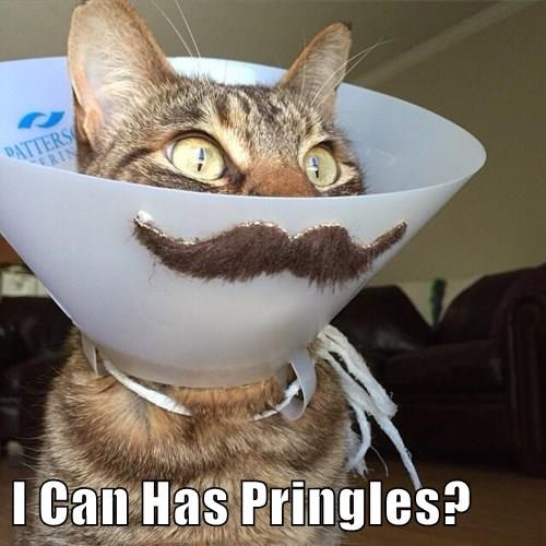 animals captions Cats funny - 8554344192