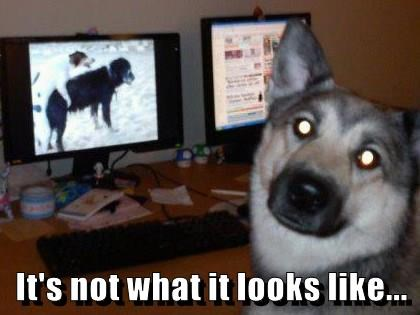 animals dogs captions funny - 8554371072
