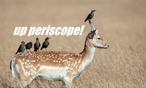 birds,captions,deer,funny