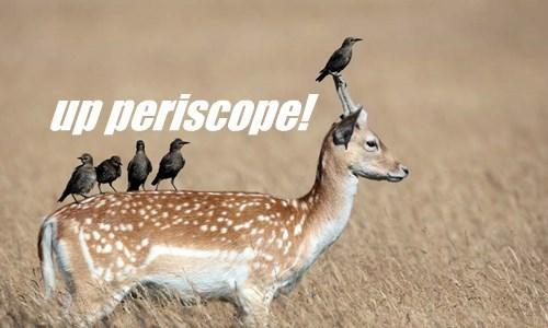 birds captions deer funny - 8554376960