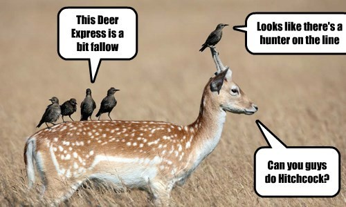 birds captions deer funny - 8554384640