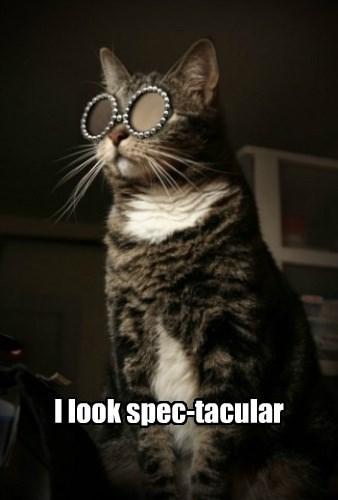 captions puns cute Cats - 8554407424