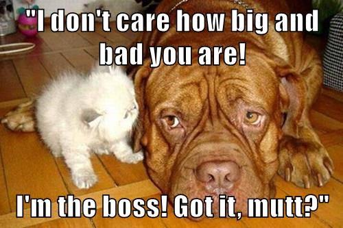 animals boss dogs im kitten caption big and bad - 8554459648