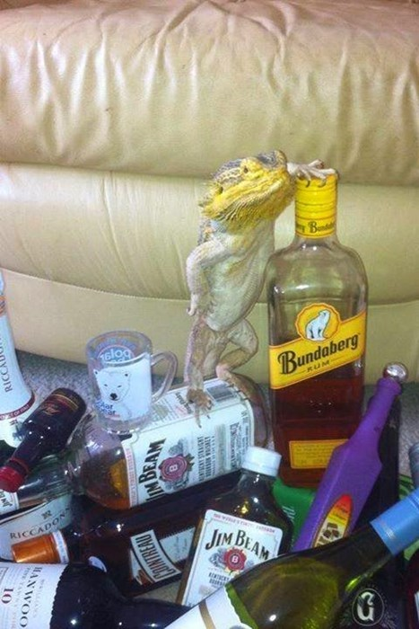 party-fails-gettin-slizard