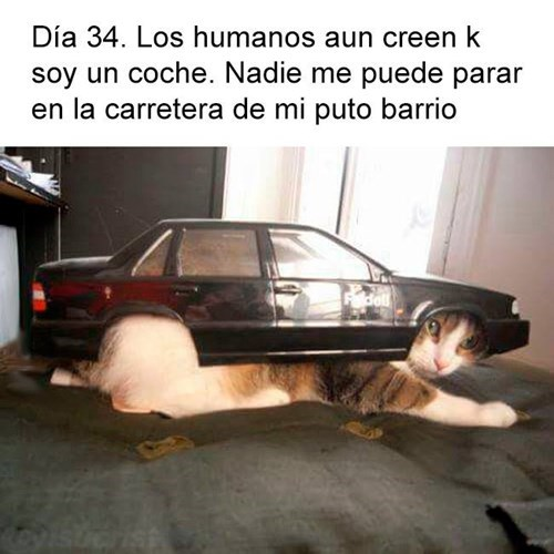 camuflaje de gato
