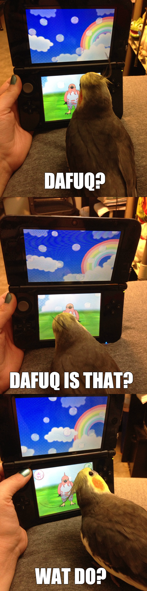 pokemon memes bird sees talonflame