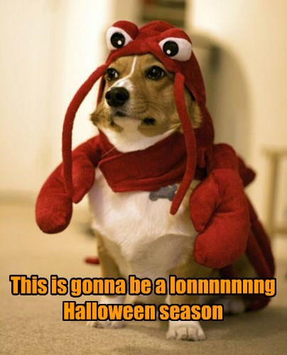 costume lobster dogs long halloween caption