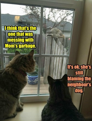 dogs,raccoon,garbage,caption,blaming,Cats