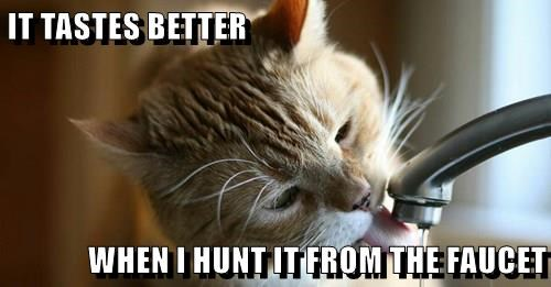 animals thirsty faucet Cats hunt captions - 8554869248