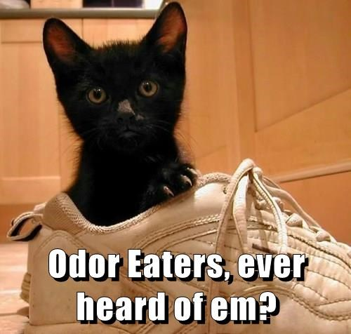 Odor Eaters, ever heard of em?