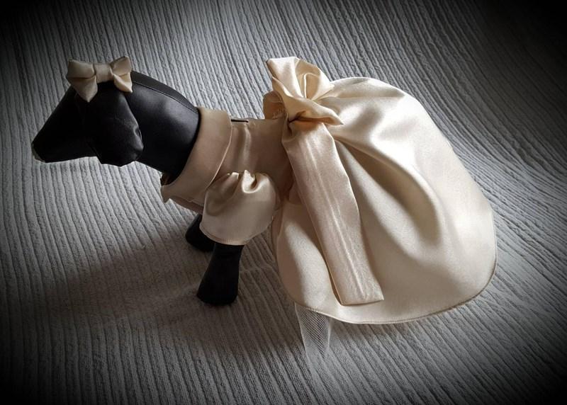 Dog dressed up in a fancy wedding dress