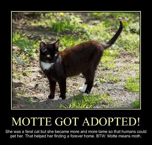 MOTTE GOT ADOPTED!