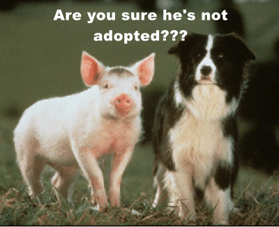 animals dogs pig captions funny - 8555179008