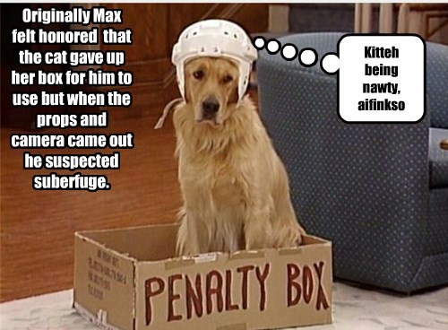 dogs,naughty,box,camera,kitty,caption