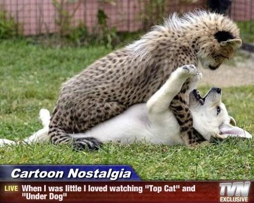 Top Cat underdog caption - 8555189504