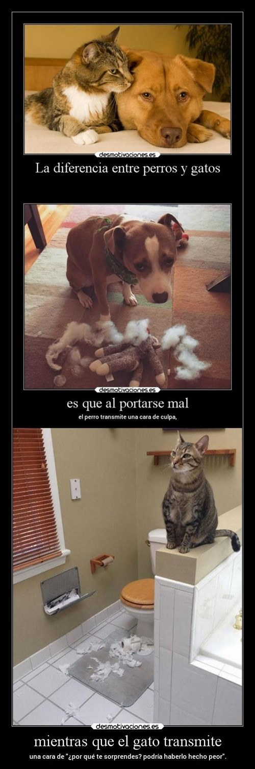 Diferencia entre perros y gatos