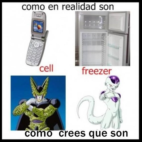 cell y freezer