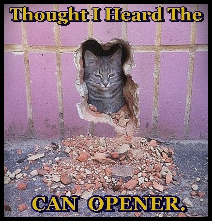cat,heard,caption,can opener