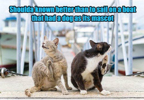 dogs,mascot,fleas,caption,Cats