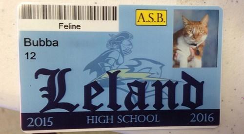Cat - A.S.B. Feline Bubba 12 Leland 2016 HIGH SCHOOL 2015
