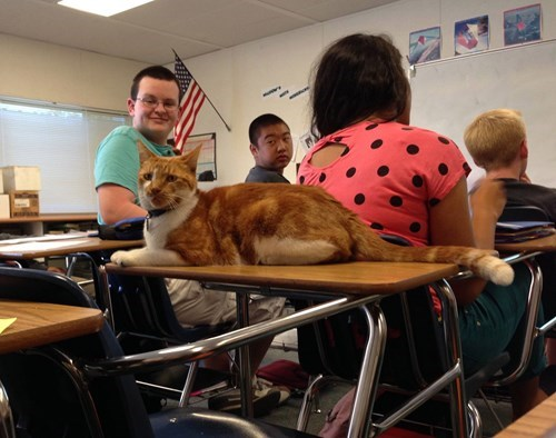 cute cats image He Goes to Class