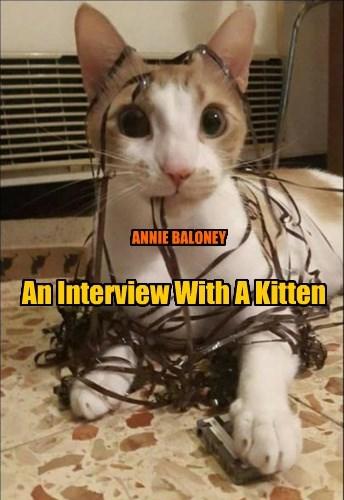 An Interview With A Kitten