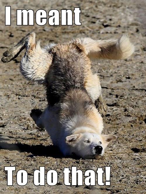 animals dogs trip caption funny - 8555638784