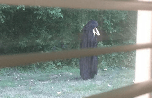 Some person is dropping raw meat while wearing a cloak in North Carolina.