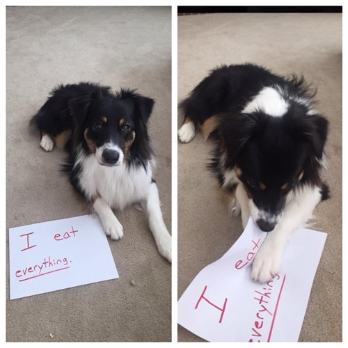 At Least This Dog Deserved the Shaming He Got
