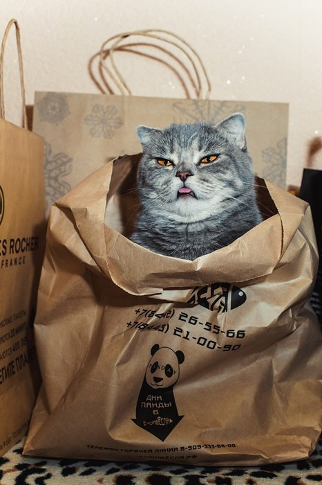 cute cats image This Bag Only Stores Cats Now