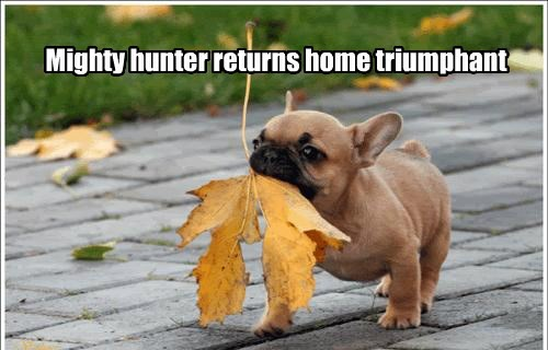 dogs returns triumphant caption mighty hunter - 8555850752