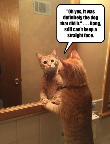 keep cat face caption straight cant dog did it - 8555887104