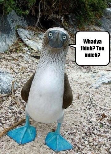 birds captions funny - 8555890176
